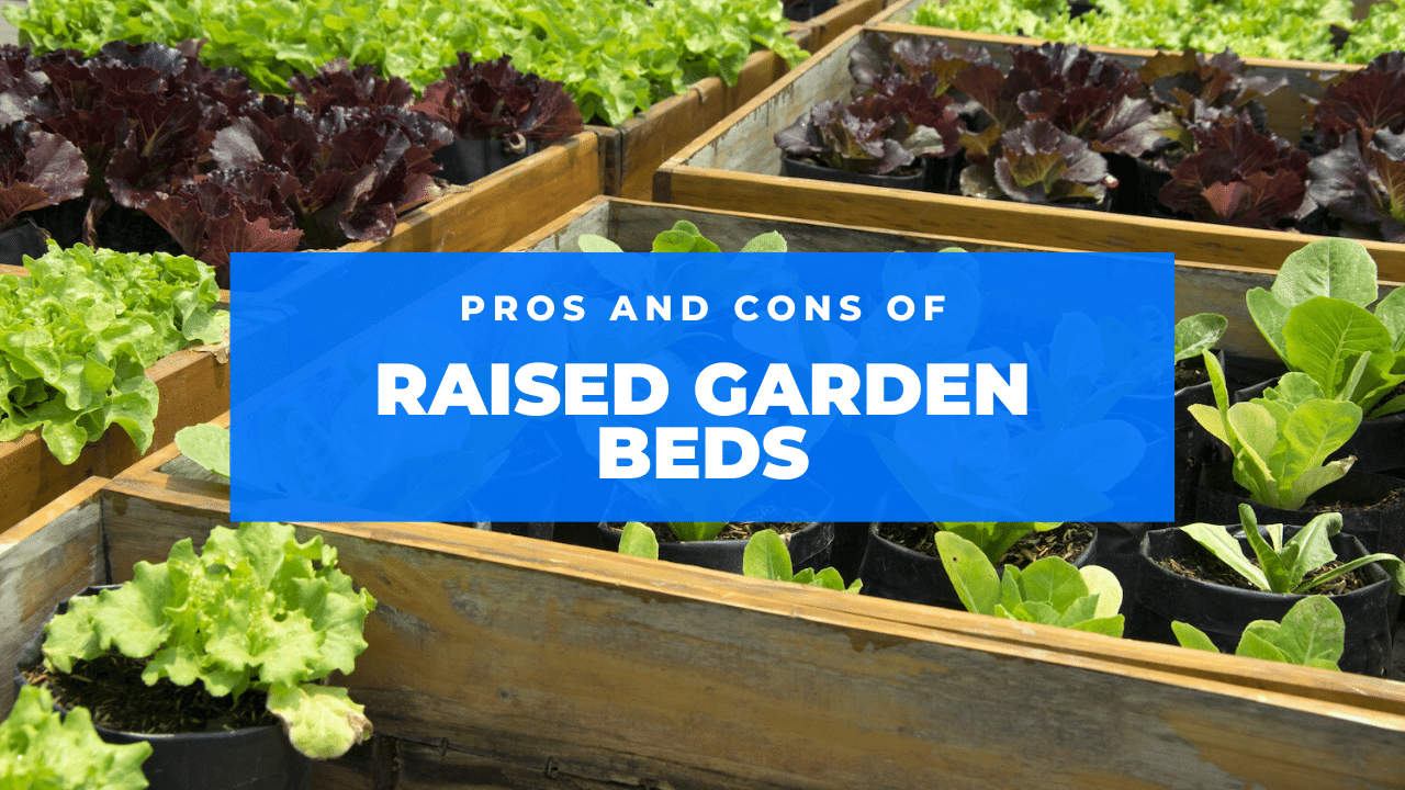 raised garden beds featured