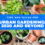 Recommendations for Urban Gardening In 2020 and Beyond