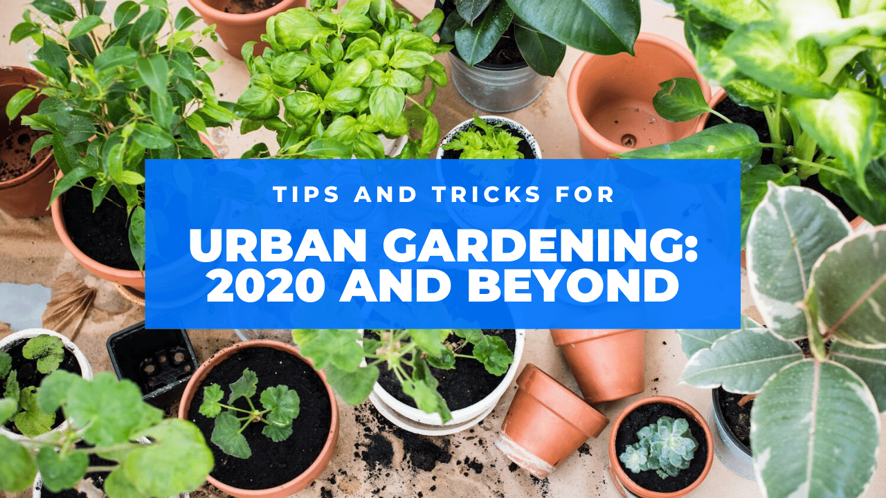 urban gardening featured
